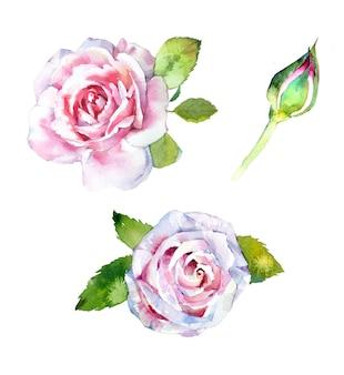 Handgemaltes rosenillustrationsset des aquarells lokalisiert auf einem weißen hintergrund.