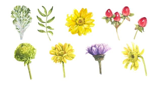 Handgezeichnete realistische aquarell-set aus chrysantheme und blättern auf weißem hintergrund