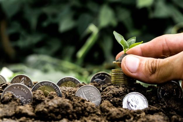 Handhaltepflanze auf silbermünzen