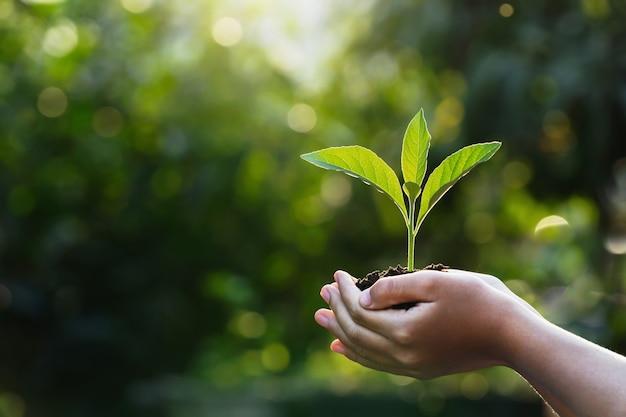 Handkinder, die junge pflanze mit sonnenlicht auf grüner natur halten. konzept öko tag der erde