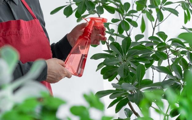 Handsprüher oder spender mit wasser in der nähe der zimmerpflanze, kümmern sie sich um das pflanzenkonzept.