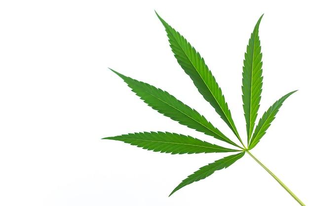 Hanf- oder cannabis-marihuana-blatt isoliert auf weißem hintergrund