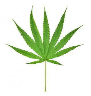 Hanfblatt, marihuanablatt lokalisiert auf weißem hintergrund