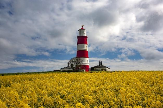 Happisburgh leuchtturm in der mitte des feldes mit gelben blumen in norfolk, uk