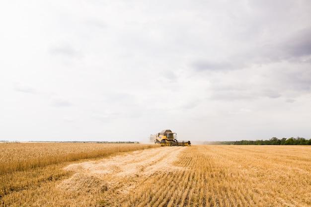 Harvester sammelt weizenkorn auf dem feld.