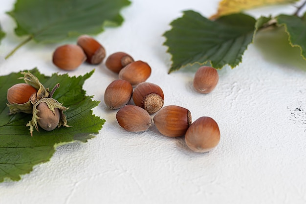 Haselnüsse auf hellem hintergrund mit grünen blättern. enthält nützliche vitamine und mineralstoffe.