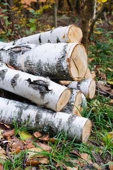 Haufen der birke meldet den wald unter dem gras und den bunten gefallenen blättern an.