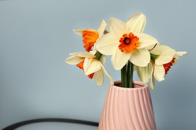 Haufen frischer narzissen an dunkelgrauer wand schöne cremeweiße blumenanordnung in einer stilvollen rosa vase floristischer kopienraum