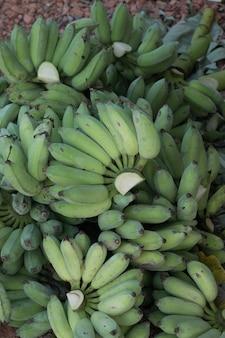 Haufen grüne bananen