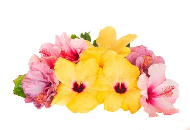 Haufen hibiskus flowesr isoliert