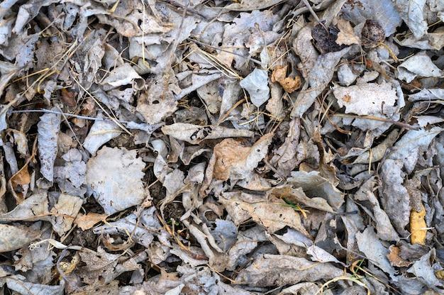 Haufen trocken verdorrter gefallener herbstblätter von bäumen