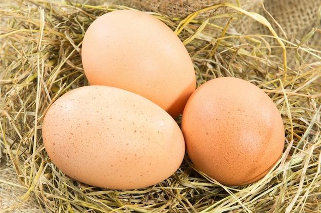 Haufen von braunen eiern in einem nest