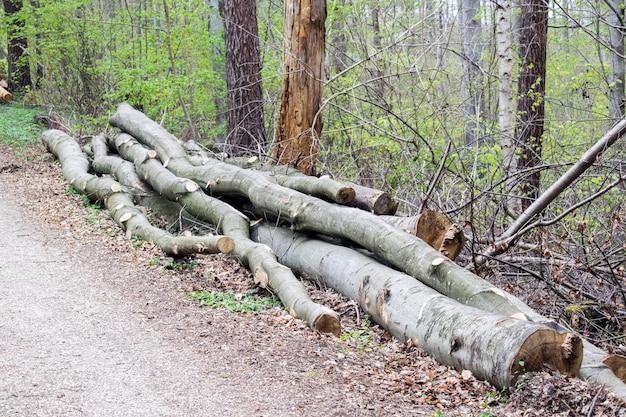 Haufen von gefällten bäumen in der nähe einer logging-seite warten auf weggetrieben werden