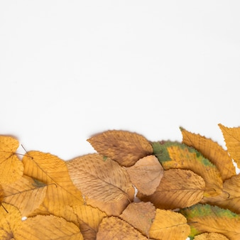 Haufen von getrockneten herbstblättern