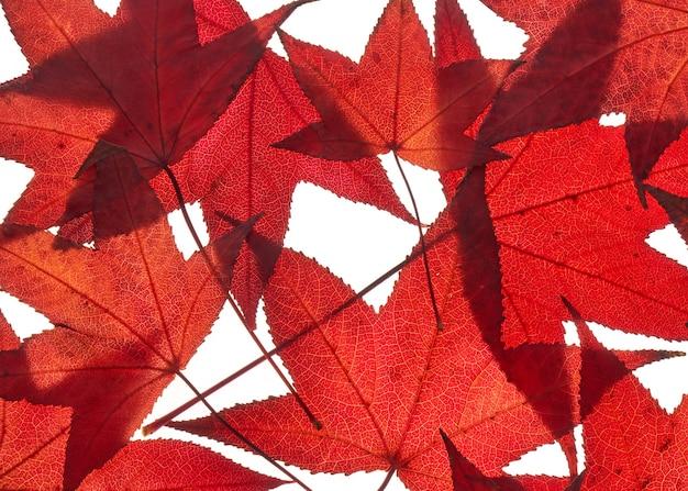Haufen von roten herbstliquidambarblättern, ahornlaubhintergrund