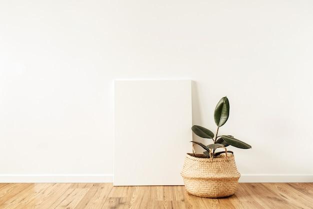 Hauptpflanzenficus vor leerer leinwand