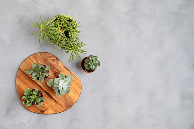 Haupttopfpflanzen über grauem betonhintergrund