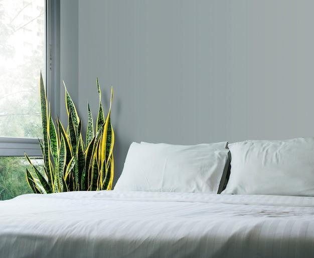 Haus- und gartenkonzept von sansevieria trifasciata oder von schlangenanlage im schlafzimmer