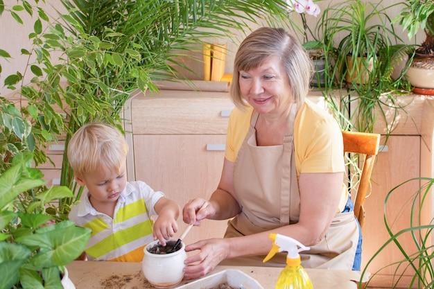 Hausgarten der älteren frau pflege von hauspflanzen mit ihrem enkel