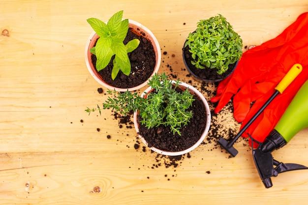 Hausgartenarbeit. draufsicht auf rote handschuhe, minze, thymian und basilikumbusch in töpfen und gartengeräte auf holzbrett