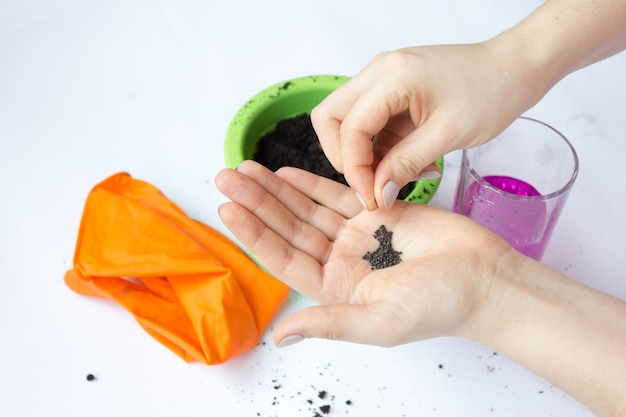 Hausgartenarbeit, pflanzensamen pflanzen. düngerboden für setzlinge.