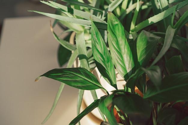 Hausgartenkonzept mit verschiedenen topfpflanzen, sukkulenten, weißer wand