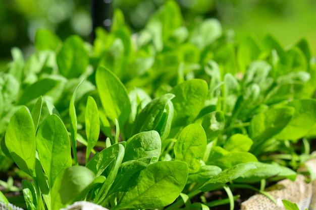 Hausgemachtes bio-gemüse