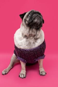 Haushund mit kleidung