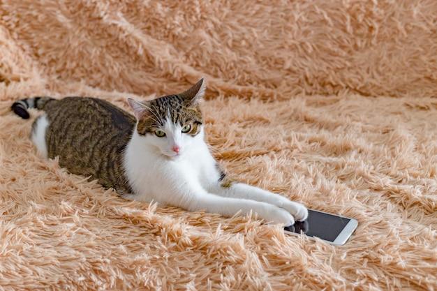 Hauskatze, die auf einem sofa im wohnzimmer, nah oben liegt. katzenpfoten halten ein smartphone