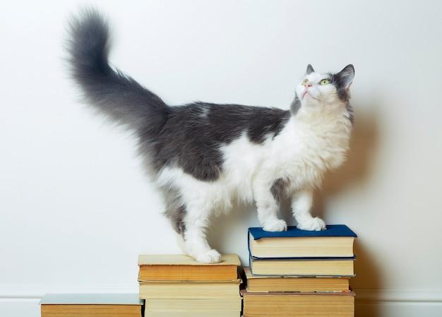 Hauskatze steht auf einem stapel bücher gegen weiße wand