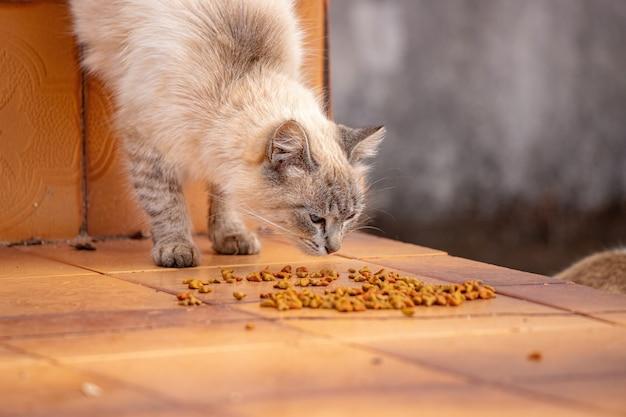 Hauskatzengesicht hockte sich hin und frisste futter auf dem boden