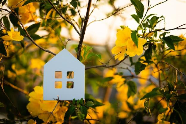 Hausmodell auf dem baum, ein symbol für bau, ökologie, darlehen, hypothek, eigentum oder zuhause.
