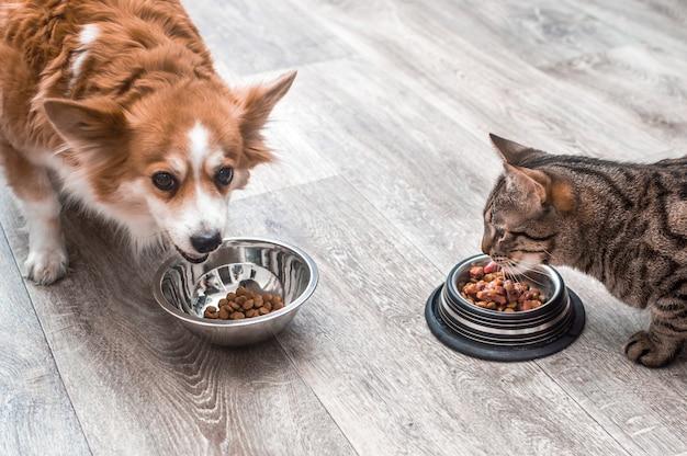 Haustier, das nahrung isst. hund und katze, die nahrung aus der schüssel essen. nahaufnahme