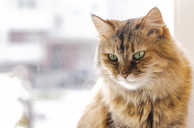 Haustier - eine katze sitzt an einem fenster und sonnt sich in der sonne. lieblingstiere, häuslicher komfort.