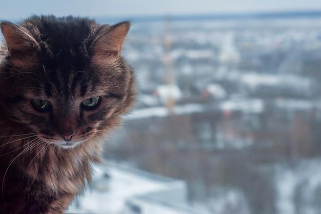 Haustier im winter. grünäugige katze. katze über einer winterstadt.
