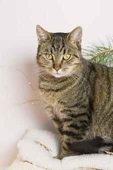 Haustier-, weihnachts- und gemütlichkeitskonzept - eine katze der getigerten katze, die auf einer warmen strickjacke in einer weihnachtsatmosphäre sitzt.