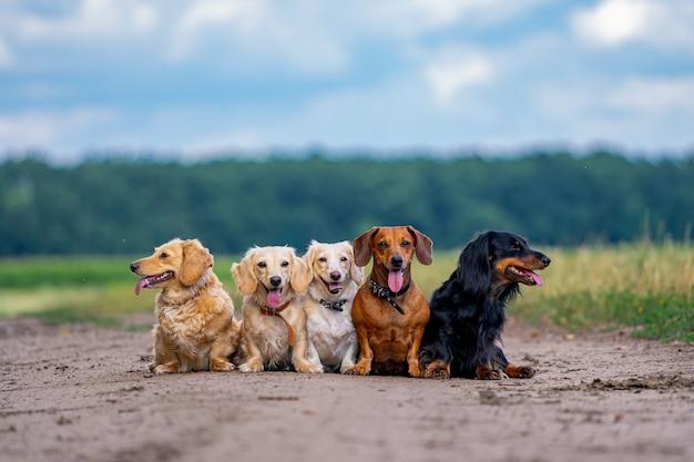 Haustiere. fünf hunde sitzen in einer schlange auf dem boden. verschiedene rassen, die draußen spazieren gehen.