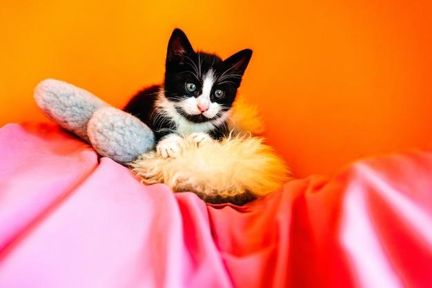 Haustierkätzchen zu haben erfordert die verantwortung, sie richtig zu pflegen.
