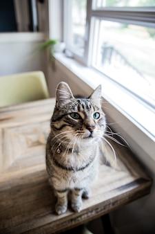 Haustierkatze, die auf tisch sitzt
