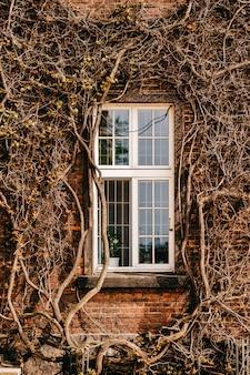 Hauswand mit fenstern und kletterpflanze.