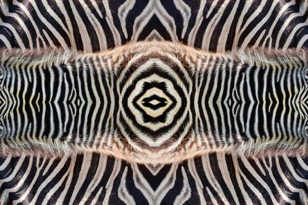 Haut des zebras