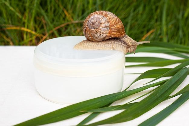 Hautpflege-mucin-kosmetik auf basis von traubenschnecken.