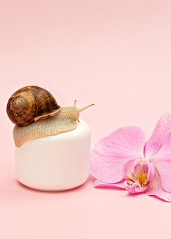 Hautverjüngungskosmetik auf rosafarbenem hintergrund mit schnecke und orchideenblüte, schneckenschleimcreme, hautfeuchtigkeit, schönheit, gesundheit, spa-konzept. weicher selektiver fokus, kopienraum.