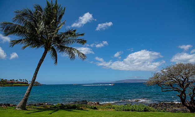 Hawaiianischer strandhintergrund, der das paradies in der tropischen landschaft des hawaii-panoramas der sommerlandschaft genießt ...