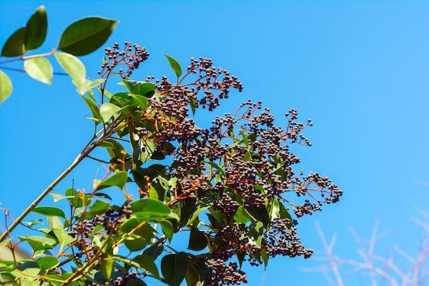 Heckenblumen auf blauem himmelshintergrund
