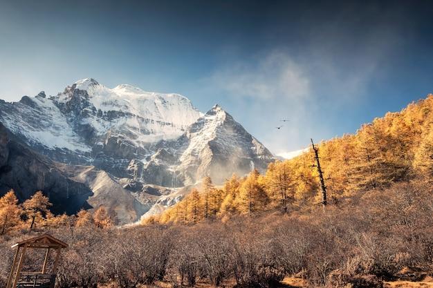 Heiliger berg xiannairi mit goldenem kiefernwald im herbst bei yading