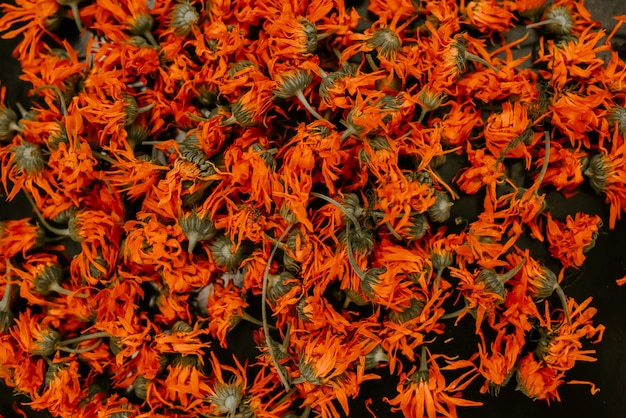 Heilkräuter getrocknete pflanzen ringelblume orangen calendula