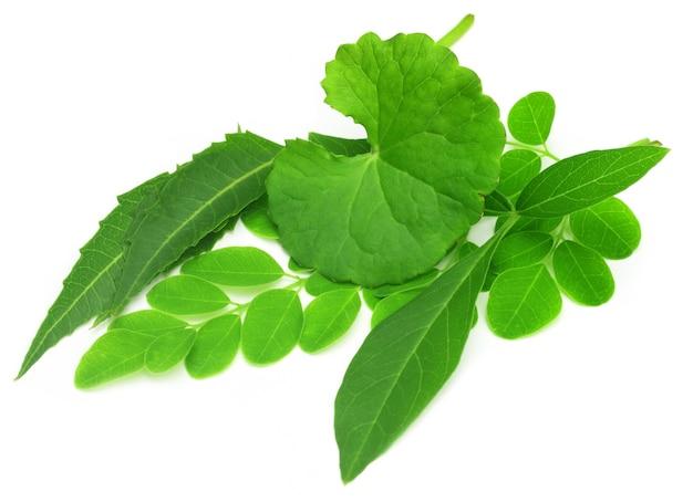 Heilkräuter - thankuni, neem, moringa und vitex negundo