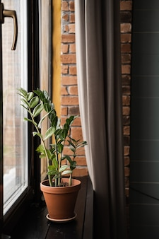 Heimpflanzen gegen mauer. heimpflanze im topf.