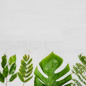 Helle blätter von exotischen pflanzen